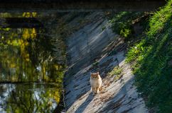 Кот сидит в заходе солнца - осени снятый от сельской местности стоковое фото