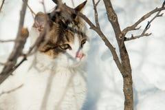 Кот сидит в снеге Стоковая Фотография RF