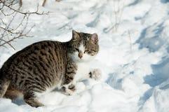 Кот сидит в снеге Стоковая Фотография