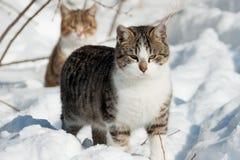 Кот сидит в снеге Стоковые Фотографии RF