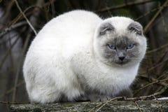 Кот сидит на крыше стоковая фотография rf