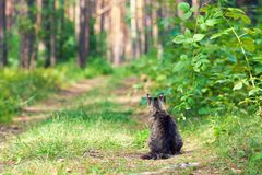 Кот сидит на пути в лесе Стоковые Фото