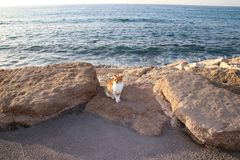 Кот сидя морем Стоковые Фото