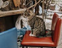 Кот сидя на баре стоковые фотографии rf