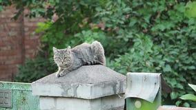 Кот сидя на загородке сток-видео