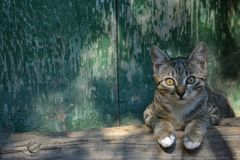 Кот сидя на старом деревянном пороге Стоковые Изображения