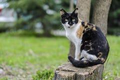 Кот сидя на хоботе смотря, против расплывчатой предпосылки стоковые изображения