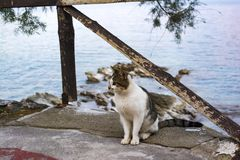 Кот сидя на seashore деревни Mochlos, Крита, Греции Стоковое Изображение RF