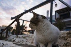 Кот сидя на seashore деревни Mochlos, Крита, Греции Стоковые Фотографии RF