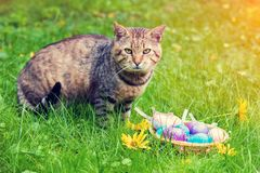 Кот сидя около корзины с покрашенными яичками Стоковые Изображения