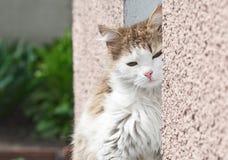 кот сидя сонное окно Стоковые Изображения