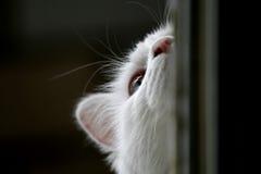 кот симпатичный Стоковые Фотографии RF