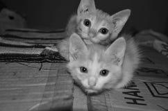 кот симпатичный Стоковое Изображение RF