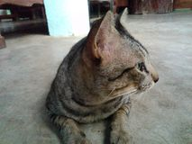 Кот симпатичный стоковое изображение