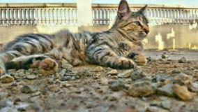 кот симпатичный Стоковые Изображения RF
