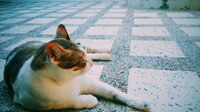 кот сиротливый стоковое изображение rf