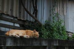 кот сиротливый Стоковое Фото