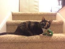 Кот ситца играет гордое & x22; mother& x22; к зеленой мыши игрушки & x22; baby& x22; Стоковая Фотография RF