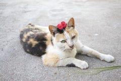 Кот ситца 3 цветов отдыхая в поле стоковое изображение rf