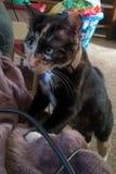 Кот ситца Стоковые Фотографии RF