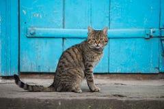 Кот сидит в дворе около голубой двери Стоковая Фотография RF