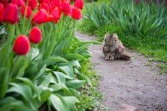 Кот сидит в саде среди тюльпанов Стоковое Изображение RF
