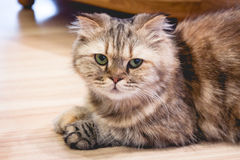 Кот сидит на поле Стоковые Изображения