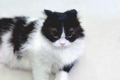 Кот сидит на поле Стоковая Фотография