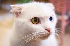 Кот сидит на поле Стоковое Фото