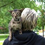 Кот сидит на плече Стоковые Изображения