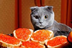Кот сидит на таблице праздника Стоковые Фотографии RF
