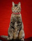 Кот сидит на черном стуле Стоковые Фотографии RF