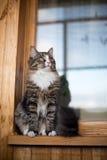 Кот сидит на windowsill Кот сидя на домашнем окне в солнечном дне Кот ослабляя на windowsill Стоковая Фотография RF