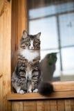 Кот сидит на windowsill Кот сидя на домашнем окне в солнечном дне Кот ослабляя на windowsill Стоковые Фото