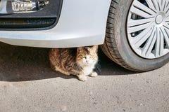 Кот сидит опасно под колесом автомобиля Стоковое Изображение RF