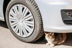 Кот сидит опасно под колесом автомобиля Стоковые Фото