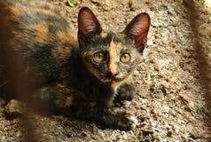 Кот сидит Стоковые Изображения