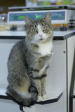 Кот сидит Стоковые Изображения RF