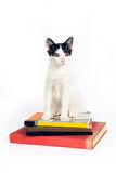 Кот сидя вниз на книгах на белой предпосылке стоковые изображения