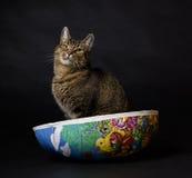 Кот сидя в пасхальных яйцах Стоковые Фотографии RF