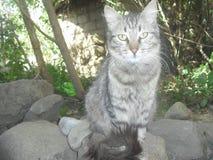 Кот сидя в саде Стоковые Изображения