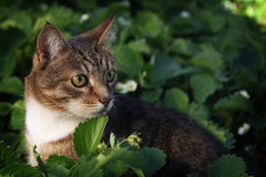 Кот сидя в траве стоковые изображения