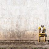Кот сидя на желтом стуле Стоковое Фото