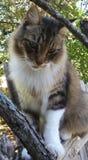 Кот сидя на загородке Стоковая Фотография