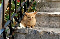 Кот сидя на каменных лестницах Стоковая Фотография