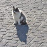 Кот сидя на мостоваой стоковое изображение