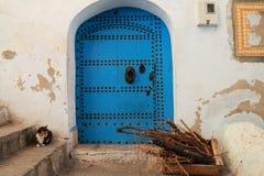 Кот сидя на немного шагов на двери дома Стоковое Изображение