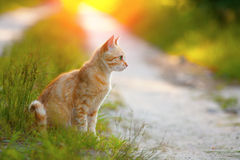 Кот сидя на дороге стоковое фото rf