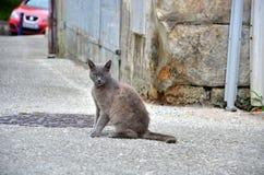 Кот сидя на дороге Стоковая Фотография