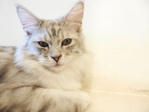 Кот сидя на поле Стоковое фото RF